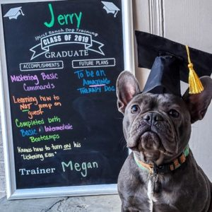 JerryCH 300x300 - Jerry Is the Real MVP (Most Valuable Pup)